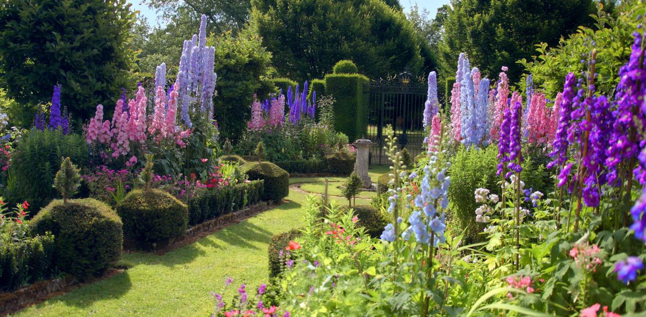 Delphiniums at Highgrove
