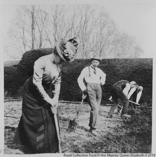 Queen Mary planting potatoes