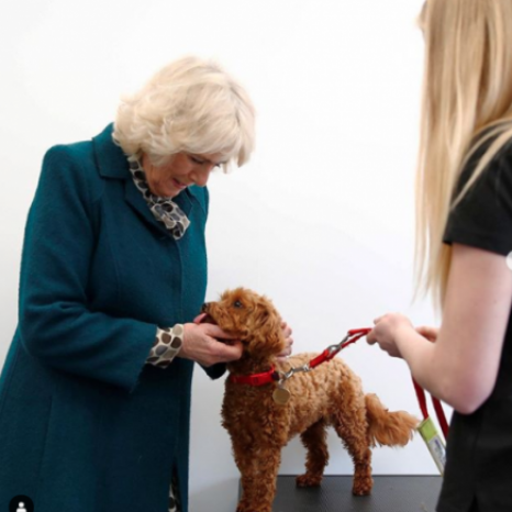 "Charity Medical Detection Dogs train dogs to detect diseases using their incredible sense of smell. 🐕 It has been announced that the charity will receive government support for their COVID-19 work. Six dogs will soon start their basic training and learn what the virus smells like.  As Patron of @medicaldetectiondogs, The Duchess of Cornwall says: ""Having been the proud Patron of Medical Detection Dogs for six years, I have every faith that these brilliant dogs will achieve remarkable results in the fight against COVID-19."" 📸 1 & 4: PA"