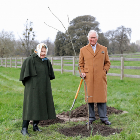 Launch of The Queen's Green Canopy